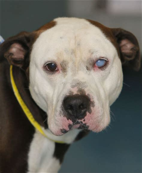 petfinders dogs for adoption petfinder dogs for adoption related keywords suggestions pets world