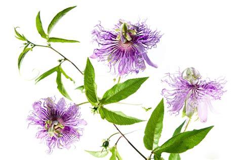 fiori medicinali le piante medicinali di aboca aboca