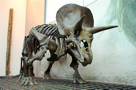 fossil forensics separating fact from in paleontology books triceratops skeleton senckenberg museum frankfurt