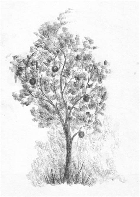 Drawing Trees by Pics For Gt Tree Pencil Drawing