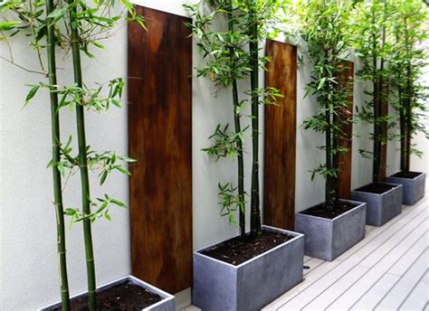 green bamboo in grey containers great for privacy