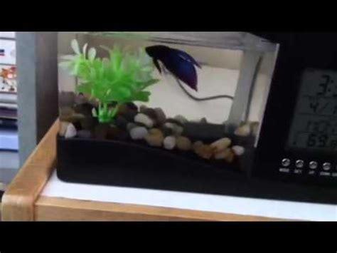Usb Desktop Aquarium fascinations usb desktop aquarium review