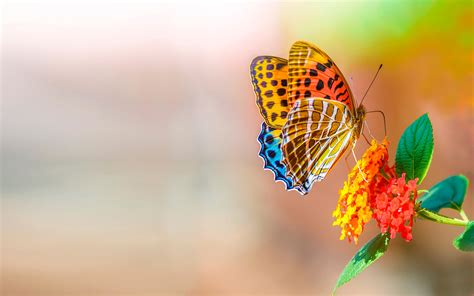 colorful love wallpaper hd colorful butterfly over colorful flower wallpaper best