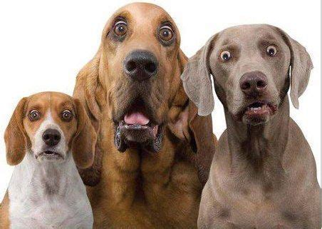 anxious puppy part three behaviors explained in plain talk by the experts decoding your