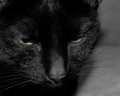 desktop wallpaper black cats black cat wallpaper for computer wallpapersafari