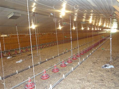 modern poultry house design modern poultry house design in kenya