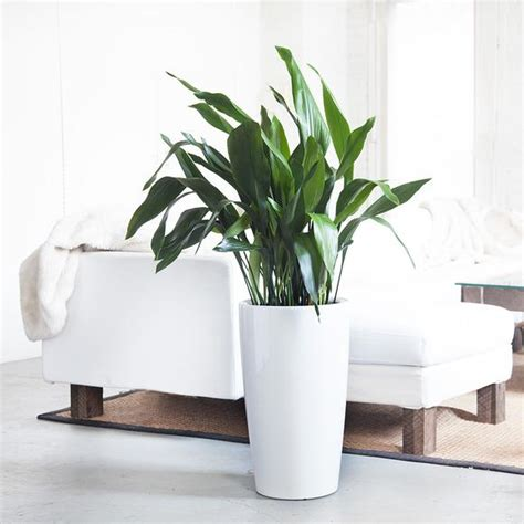 plants for office indoor plants nyc office and house plant delivery