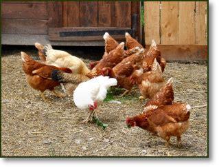 allevamenti animali da cortile cucina e prodotti agriturismo il fiocco agriturismo