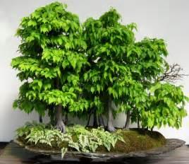 Flowers Elk Grove - plants bonsai trees minding my p s with q
