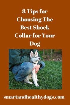1000 ideas about shock collars for dogs on