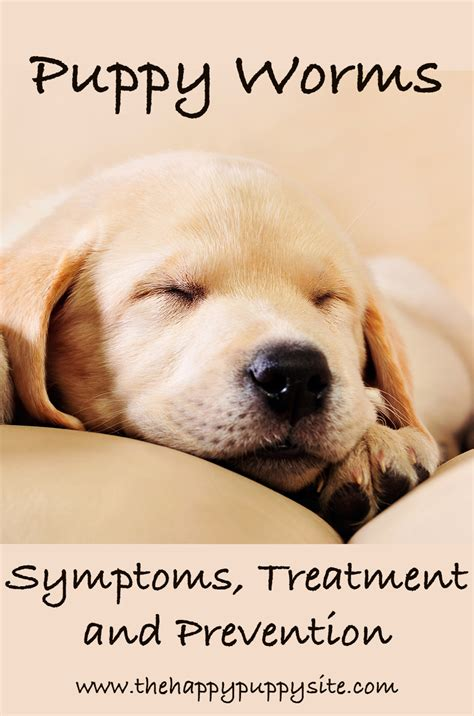 puppy throwing up worms puppy worms treatment prevention and diagnosis