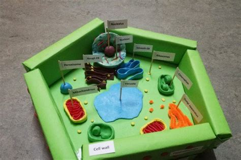 2d diagram of plant cell plant cell diagram 3d box great installation of wiring