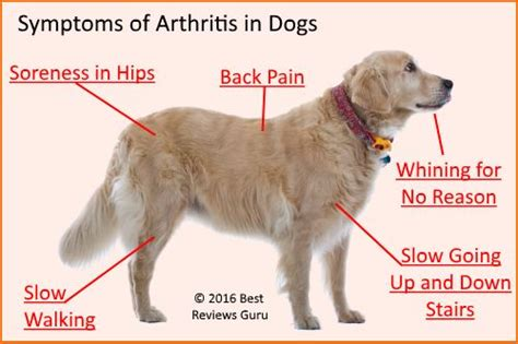 signs of arthritis in dogs best glucosamine for dogs top 6 reviewed plus chondroitin and msm