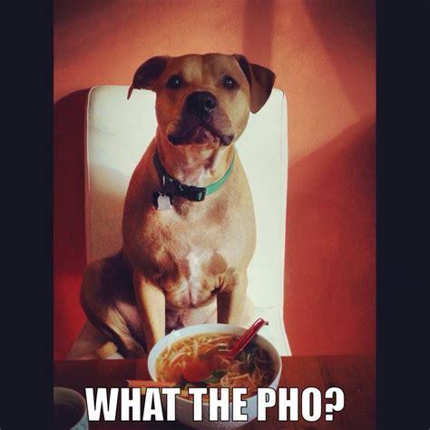 Pitbull Meme - meme loool pitbull pit humor me pinterest