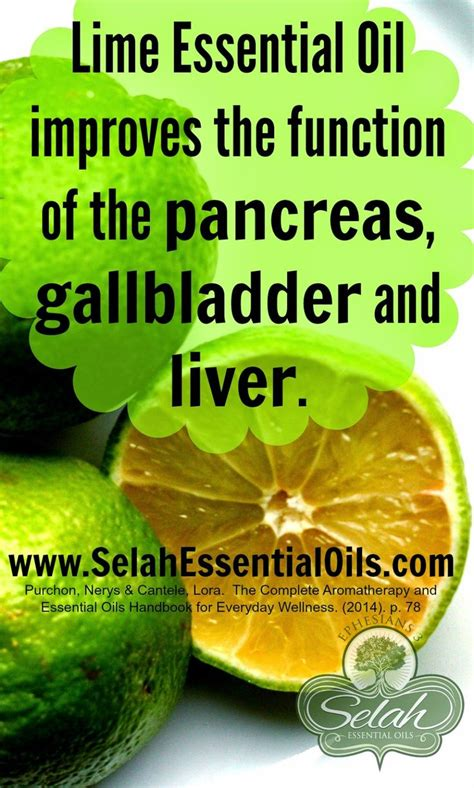 Doterra Essential Oils For Liver Detox by Lime Essential And The Pancreas Gallbladder And Liver
