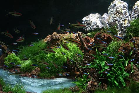 Mountain Aquascape by Slobodan Lazarevic Mountain River This Is Aquascape From