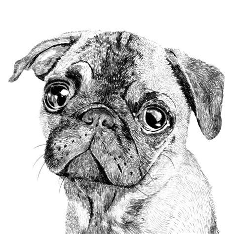 pug print pug print by ros shiers notonthehighstreet
