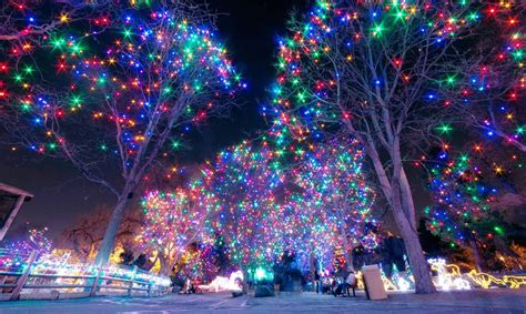 zoo lights zoo lights tickets now on sale denver zoo