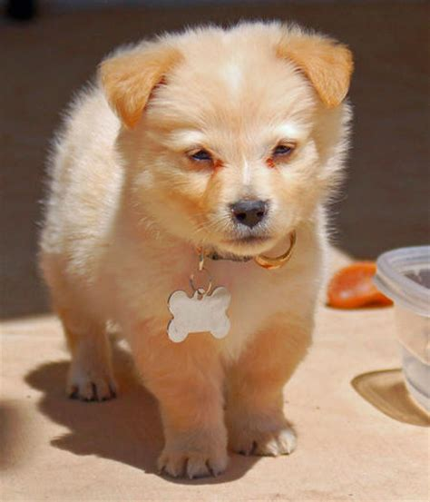 cutest puppy mixes mixed breed dogs image search results