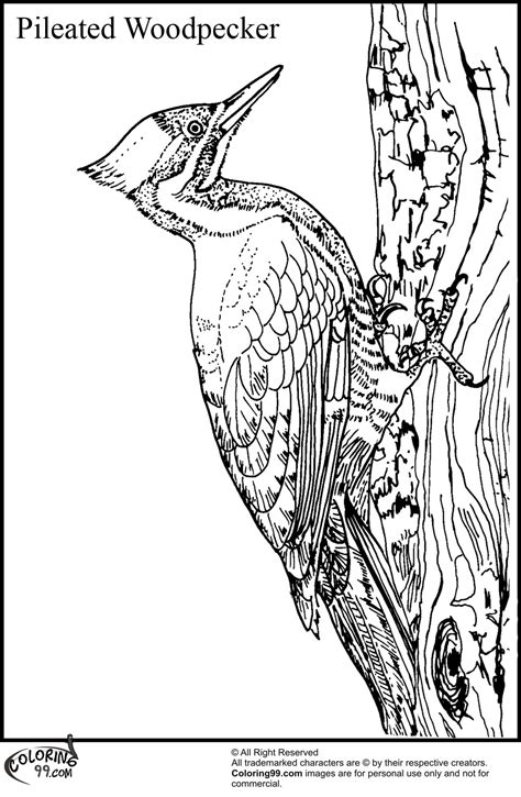Woodpecker Coloring Pages woodpecker coloring pages team colors