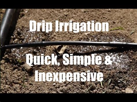 How to Install a Drip Irrigation System for Large Irreg