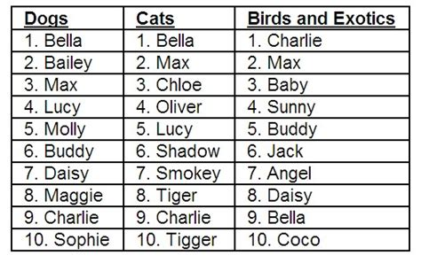 pet birds names