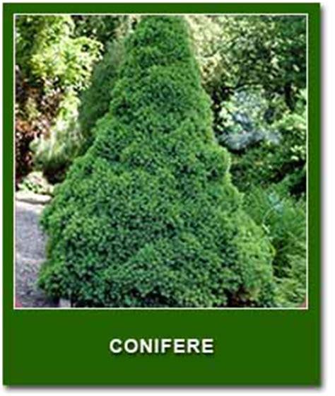 catalogo alberi da giardino alberi da giardino vivai lanari paolo