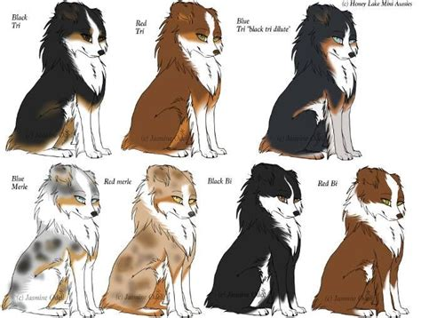 australian shepherd colors 25 best ideas about mini aussie shepherd on