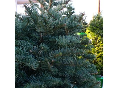 where to recycle your christmas tree in poway poway ca