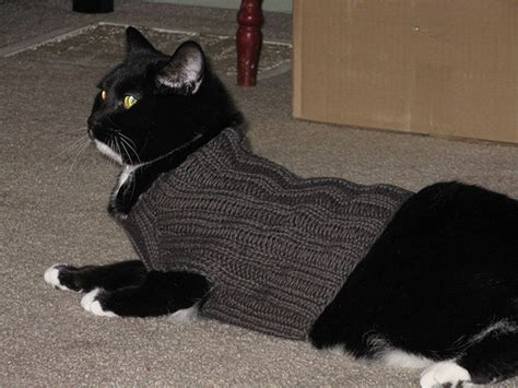 knitting pattern jumper for cat cat sweater patterns 171 free patterns