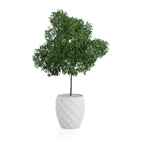Potted Trees by Potted Tree 3d Model