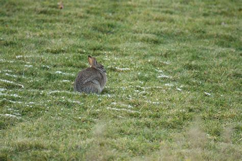 backyard rabbits backyard rabbits 28 images triyae backyard rabbits various