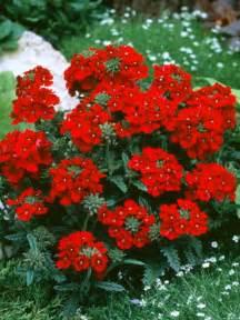 17 low maintenance plants and dwarf shrubs diy garden