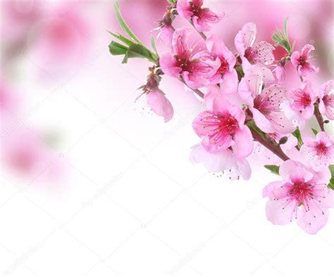 sfondi fiori di pesco rosa fiori di pesco su sfondo luminoso foto stock