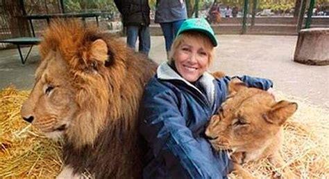imagenes de leones en zoologico el zoo de lujan droga a sus leones para poder sacarse