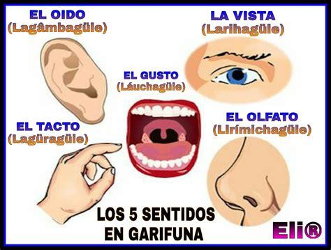 los sentidos2 los 5 sentidos en garifuna garifuna sentidos picsart