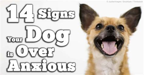 signs of stress in dogs signs of maladaptive stress reactions in dogs
