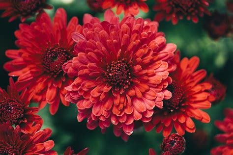 fall flowers beautiful fall flowers wallpaper wallpapersafari