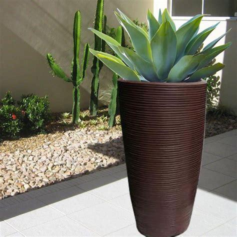 agave vaso agave attenuata ou agave drag 227 o em vaso estilo japi vasart