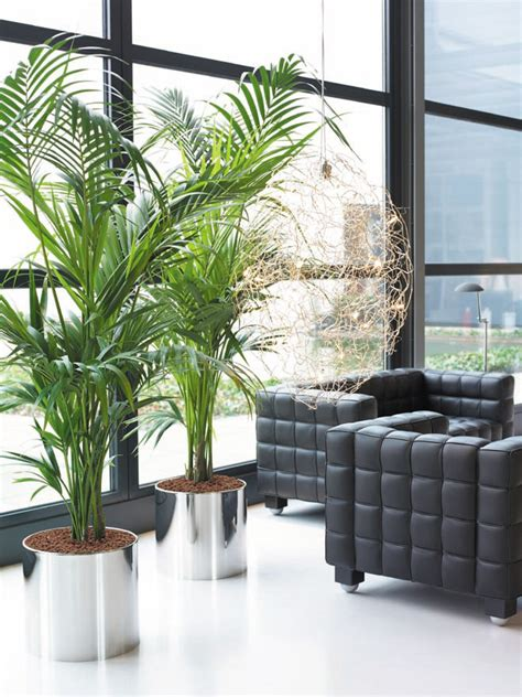 interior garden plants jungles berkshire uk interior plant displays indoor plants