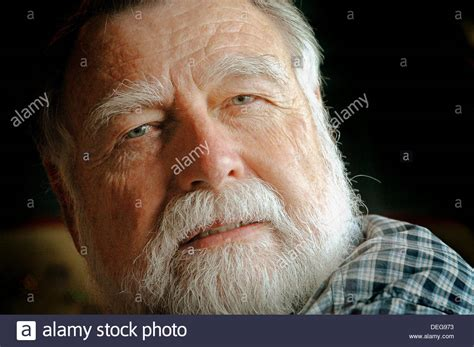 60 year old men with beards 60 year old man with beard looking like hemingway stock