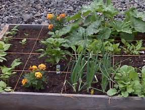 what to plant in a vegetable garden 17 best images about small vegetable garden ideas on