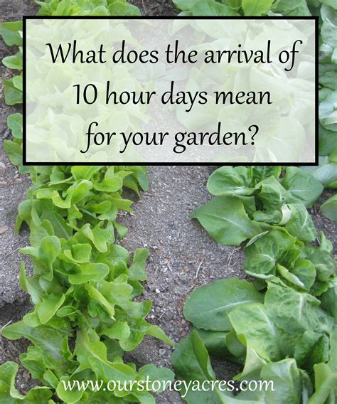 what is the meaning of backyard what does the arrival of 10 hour days mean for your garden