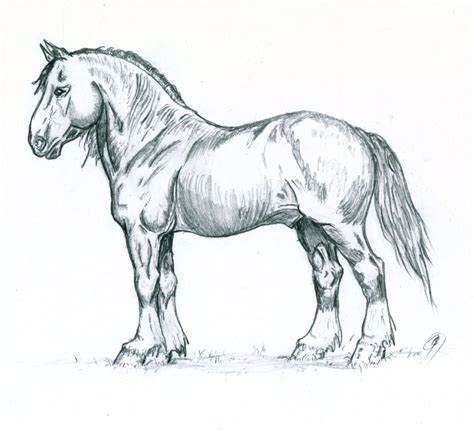 Sketches Horses by Shire Stallion Sketch By Bonesy On Deviantart