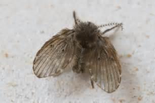 un insecte volant non identifi 233 uniquement dans la sdb