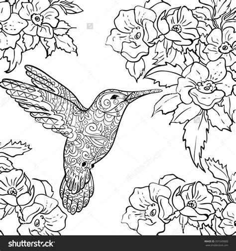 Coloring Page Hummingbird by Coloring Pages Of Hummingbirds Web Coloring Pages
