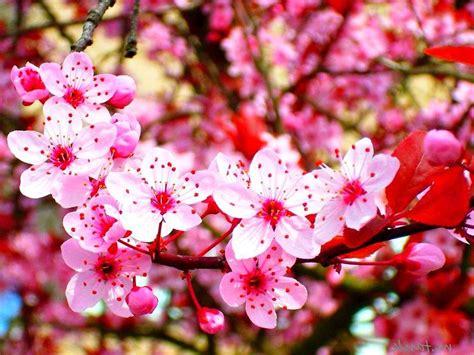 wallpaper bunga abstract bunga hesyma