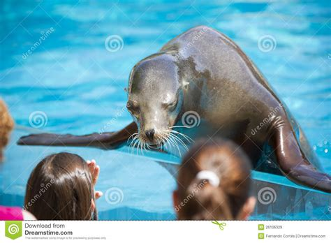 sea dogs sea with childs seal royalty free stock images image 26106329