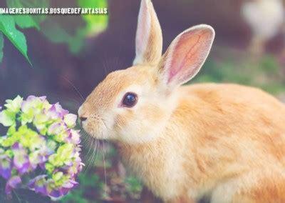 imagenes variadas de animales im 193 genes de animales 174 tiernos y bonitos 101 fotos