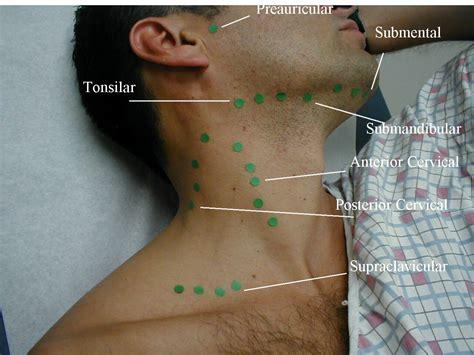 cervical lymph nodes diagram posterior cervical lymph nodes diagram anatomy organ